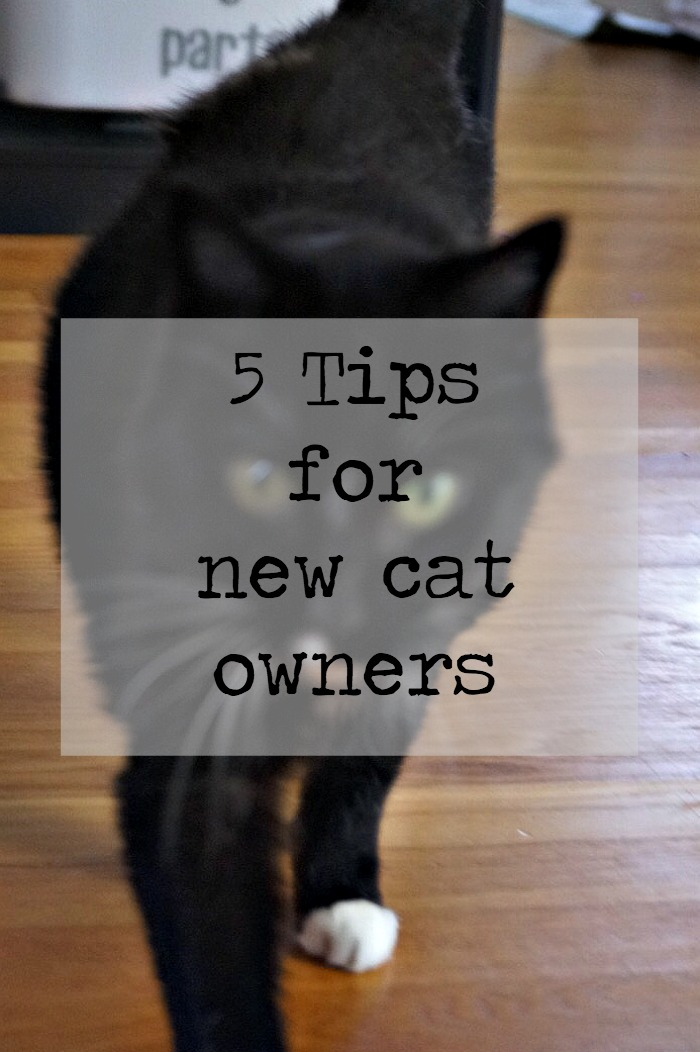 New Tip Tank Top Nash Grier Clothes Youtuber: 5 Tips For New Cat Owners #1StopPetShop #ad