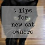 5 Tips for New Cat Owners