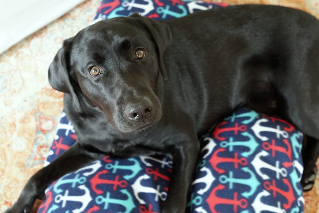 Follow this dog bed tutorial to make a comfy rest spot for your dog in under 30 minutes. You need fleece and basic sewing supplies. #WorryFreeMessFree #ad